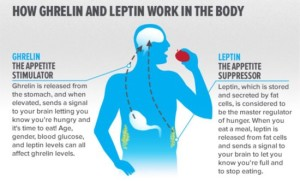 Leptin-Resistance-550x331